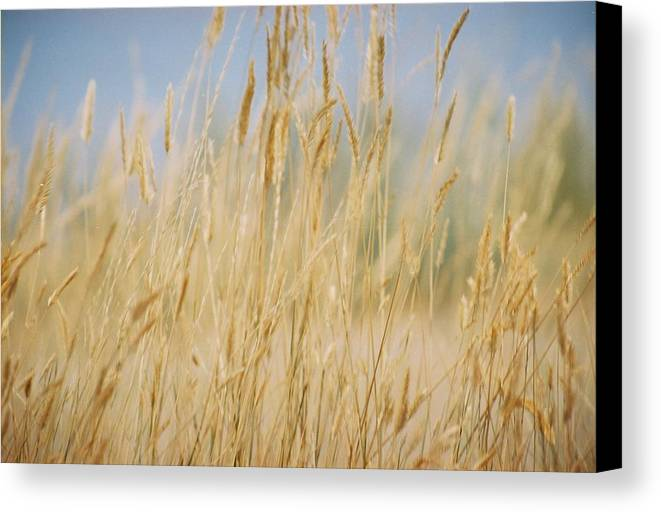 Montana Canvas Print featuring the photograph Montana Epidemic by Jennifer Trone