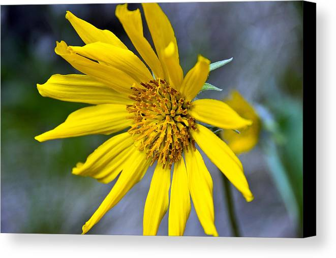 Canvas Print featuring the photograph Mountain Flower by JK Photography