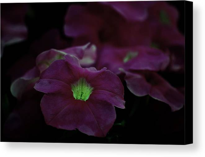Flowers Canvas Print featuring the photograph Night Light by Trudi Southerland