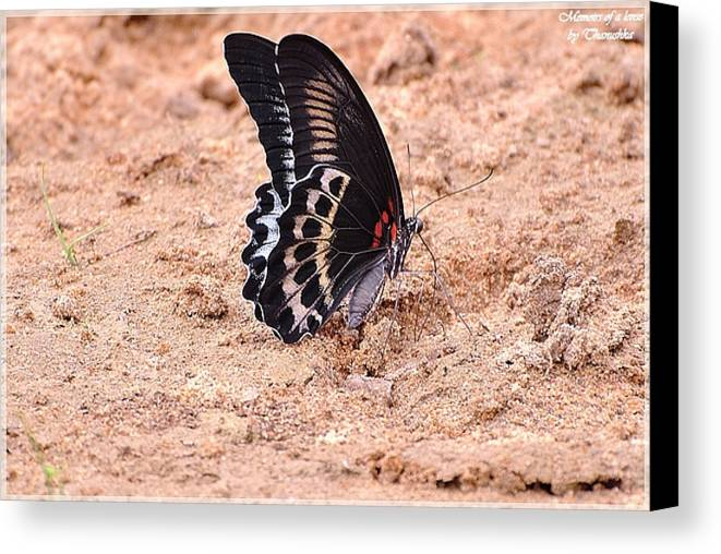 Butterfly Canvas Print featuring the photograph No Flowers by Thanushka Jayasundera