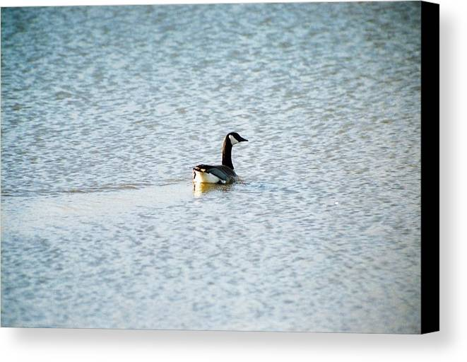 Water Canvas Print featuring the photograph On Blue Water by Jennifer Trone