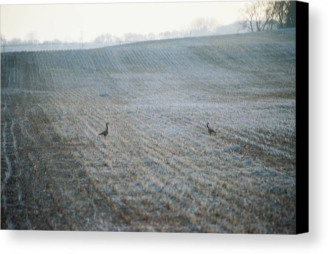 Geese Canvas Print featuring the photograph Passing Through by Jennifer Trone