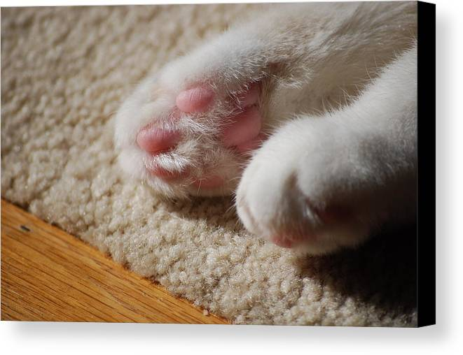 Cat Canvas Print featuring the photograph Paws by Peter McIntosh