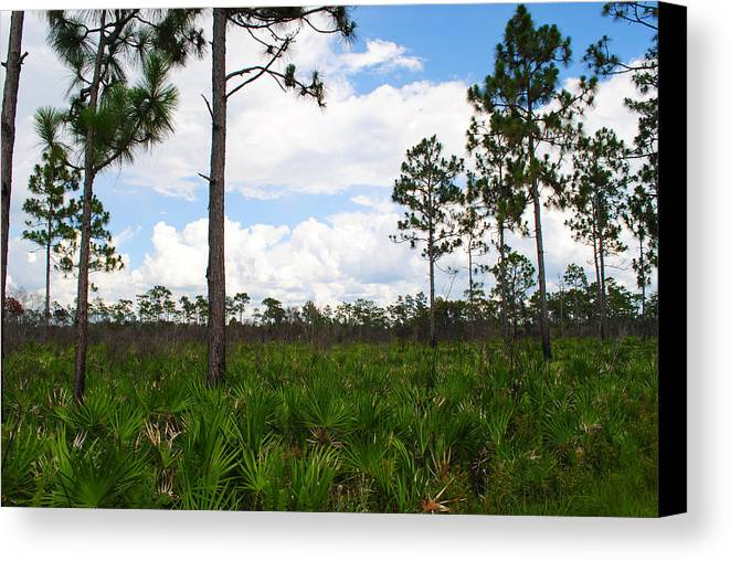 Pine Flatwoods Canvas Print featuring the photograph Pine Flatwoods by Steven Scott