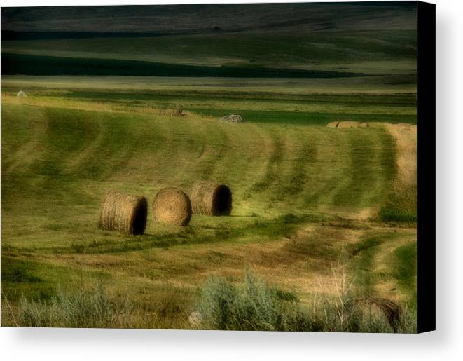 Hay Canvas Print featuring the photograph Prairie Grace by Tingy Wende