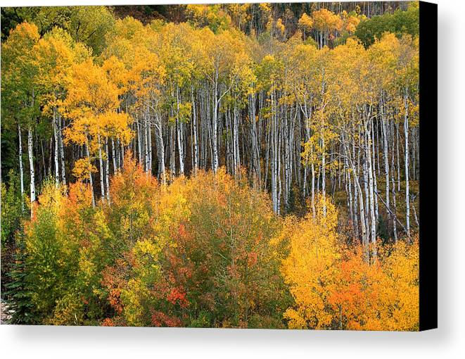 Colorado Fall Canvas Print featuring the photograph Quiet Beauty by Tim Reaves