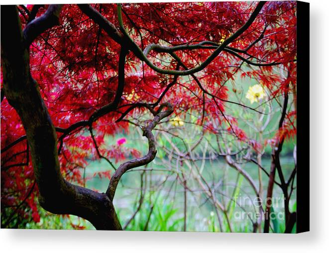 Canvas Print featuring the photograph Red Japanese Maple by Nancy Bradley