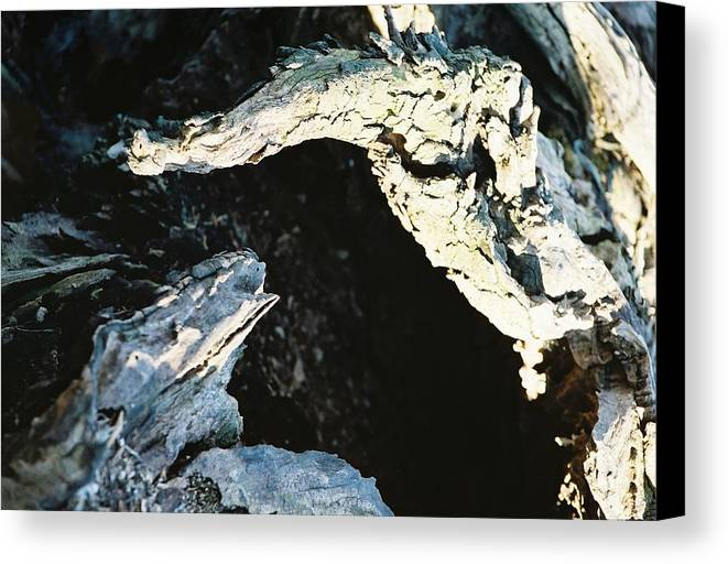 Rotting Canvas Print featuring the photograph Reptilian Morphious by Jennifer Trone
