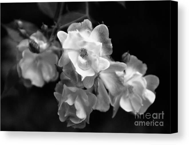 Roses Canvas Print featuring the photograph Romance Bw by Linda Shafer