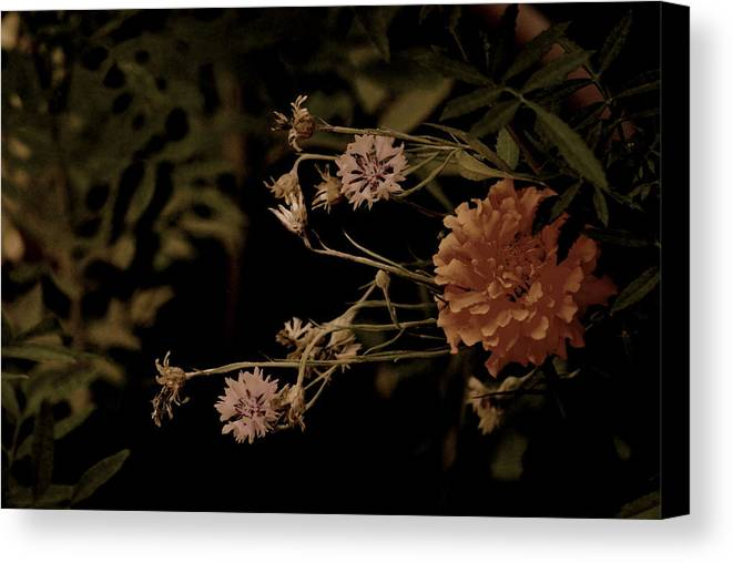 Flowers. Foliage. Nature Canvas Print featuring the photograph Simplicity by Trudi Southerland