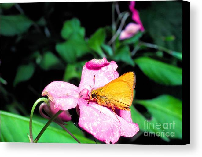 Least Skipper Butterfly Canvas Print featuring the photograph Skipper On Impatiens by Thomas R Fletcher