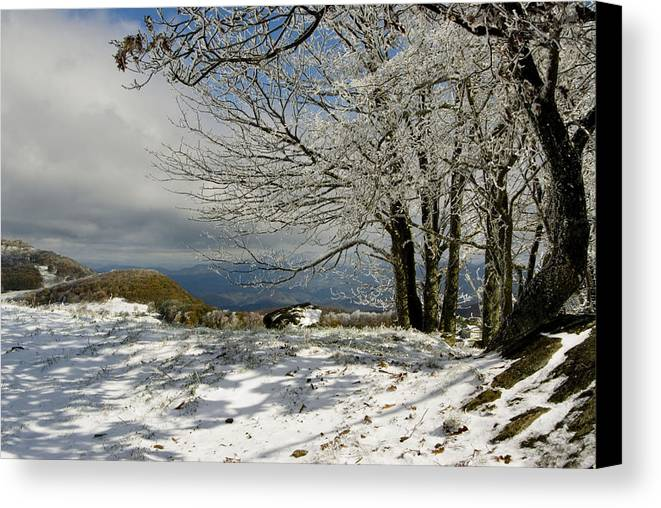 Snowy Scene Canvas Print featuring the photograph Snow On Beech Mountain by Gregory Colvin