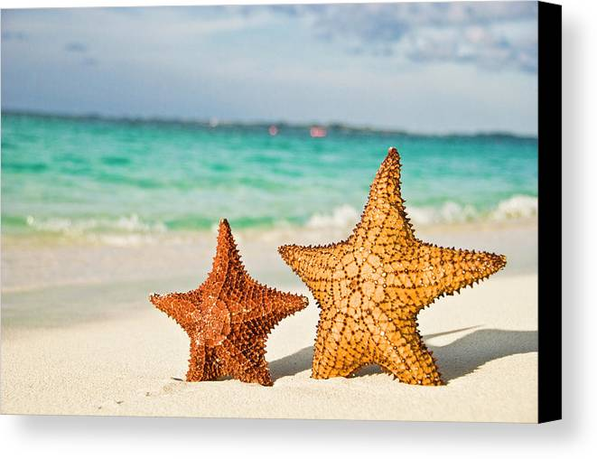Horizontal Canvas Print featuring the photograph Starfish On Tropical Caribbean Beach by Mehmed Zelkovic