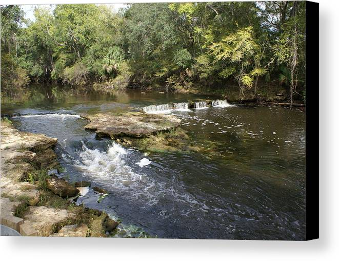 Steinhatchee Canvas Print featuring the painting Steinhatchee Falls by Debbie May