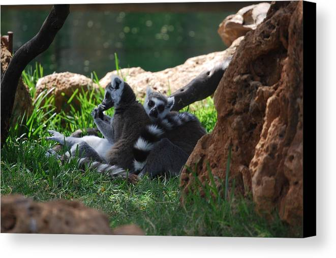 Animals Canvas Print featuring the photograph Strips by Lakida Mcnair