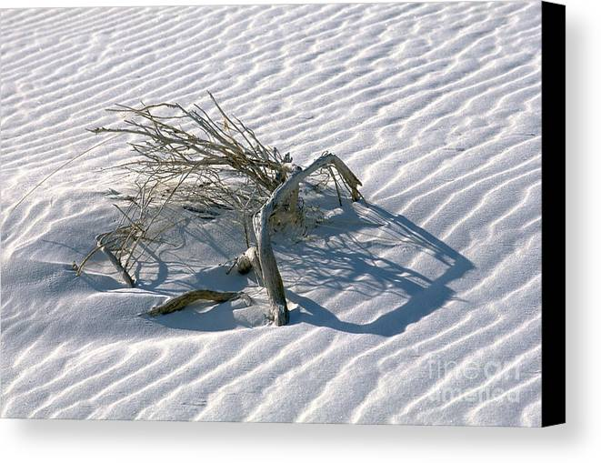 White Sands Canvas Print featuring the photograph Struggle To Survive by Sandra Bronstein