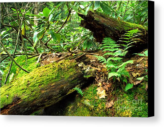 Summer Forest Canvas Print featuring the photograph Summer Forest by Thomas R Fletcher