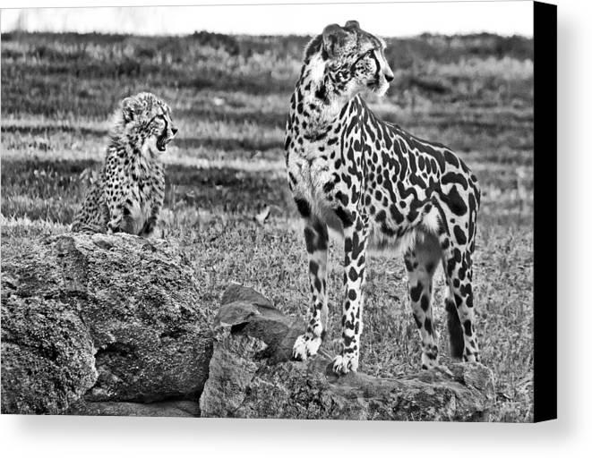 #cheetah Canvas Print featuring the photograph Thats A Yawn by Miroslava Jurcik
