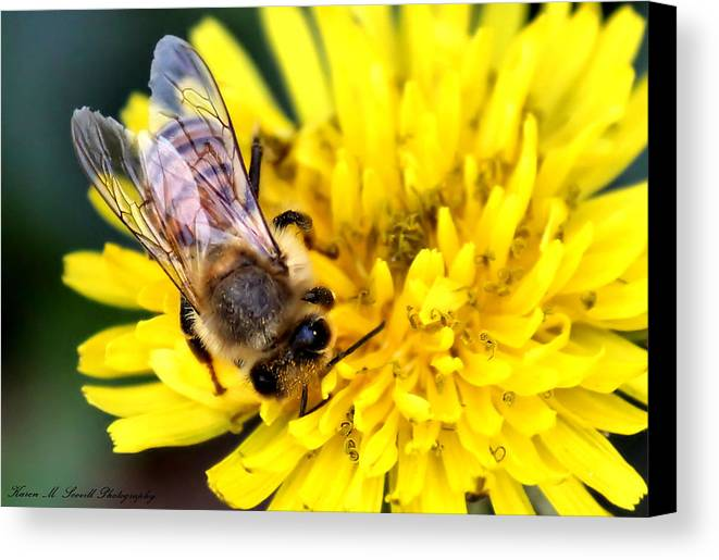 Macro Canvas Print featuring the photograph The Bee by Karen Scovill
