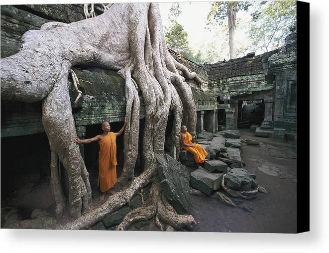 strangler Fig Trees Canvas Print featuring the photograph The Roots Of A Strangler Fig Creep by Paul Chesley