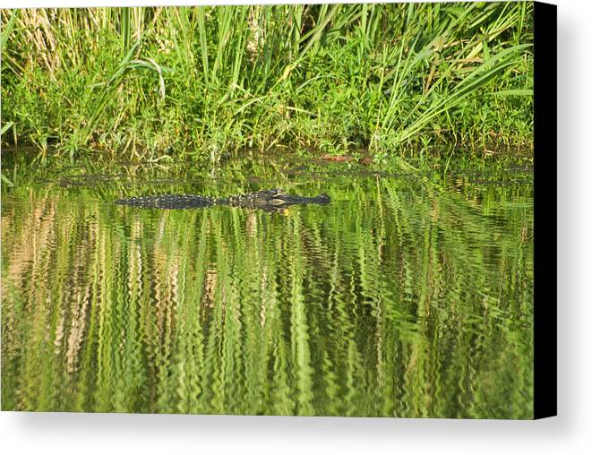 Savannah National Wildlife Refuge Canvas Print featuring the photograph Time For Some Sun by Anthony Knapp