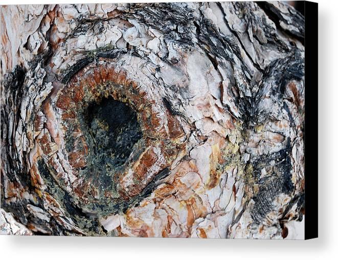 Tree Bark Canvas Print featuring the photograph Tree Bark by Apurva Madia