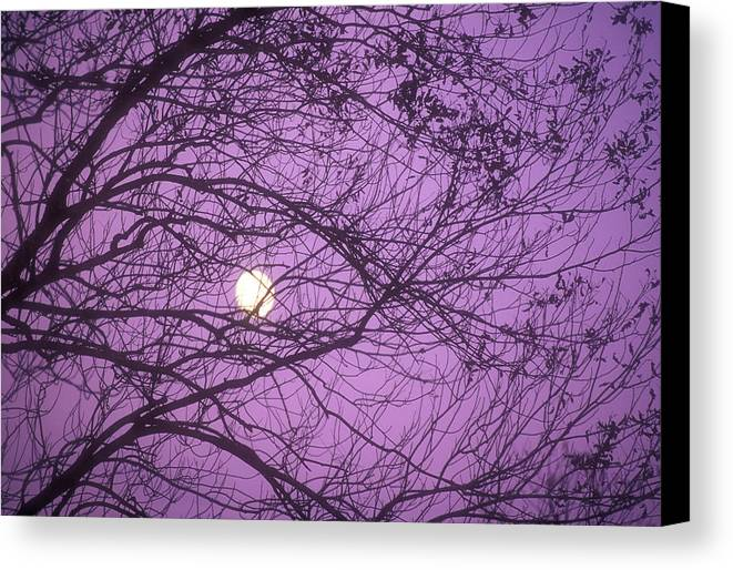 Horizontal Canvas Print featuring the photograph Tree Silhouettes With Rising Moon In Cades Cove, Great Smoky Mountains National Park, Tennessee, Usa by Altrendo Nature