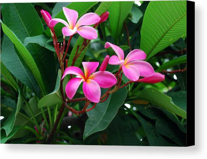 Floral Canvas Print featuring the photograph Tres Floras by M Ryan