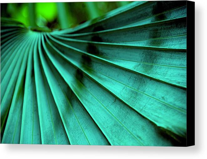 Silver Palm Leaf Canvas Print featuring the photograph Tropical Wings by Susanne Van Hulst