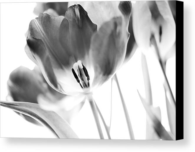 Tulip Canvas Print featuring the photograph Tulips by Silke Magino