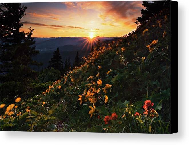 Balsamroot Canvas Print featuring the photograph Twilight Of The Balsamroot by John Christopher
