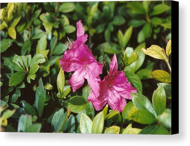 Flowers Canvas Print featuring the photograph Twins by Brian Edward Harris
