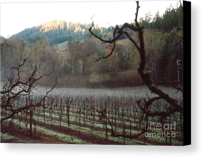 Vineyard Canvas Print featuring the photograph Vineyard In The Winter by PJ Cloud