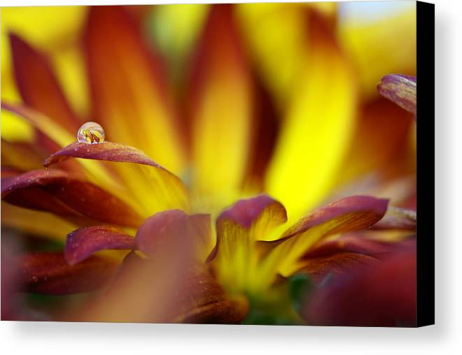 Water Drop Canvas Print featuring the photograph Water Drop by Andreas Freund