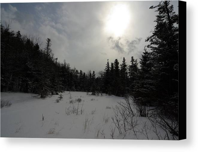 Nature Canvas Print featuring the photograph Winter Woods by Eric Workman