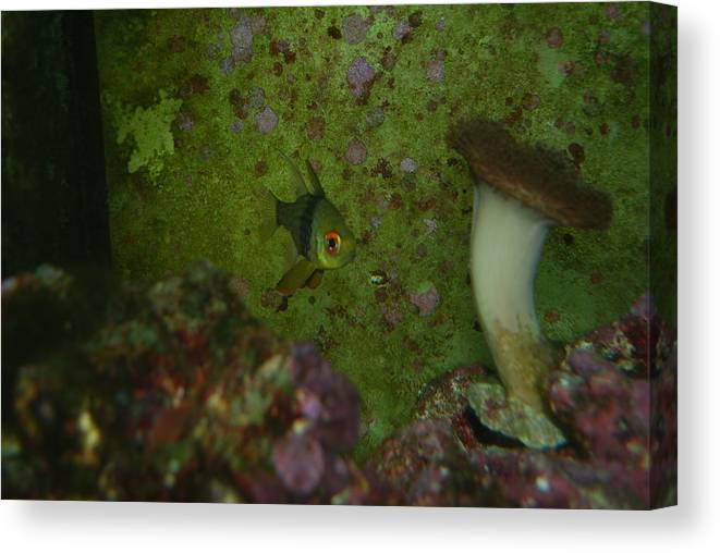 Taken Through Side Of Aquarium Canvas Print featuring the photograph Tropical Fish And Coral by Robert Floyd