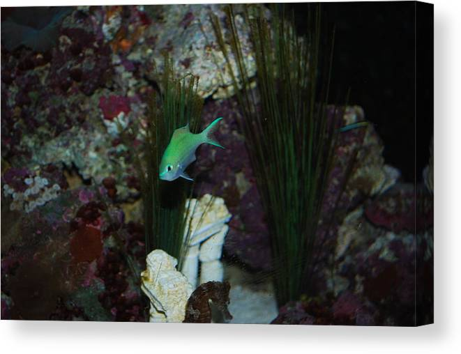 Taken Through Side Of Aquarium Canvas Print featuring the photograph Tropical Fish by Robert Floyd
