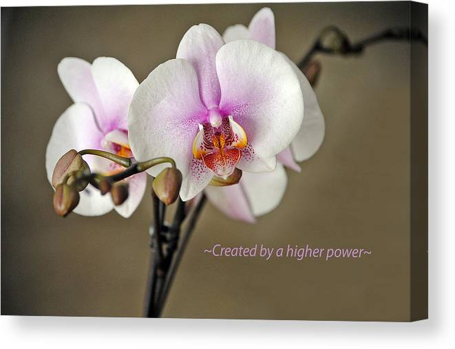 Orchid Canvas Print featuring the photograph A Higher Power by Skip Willits