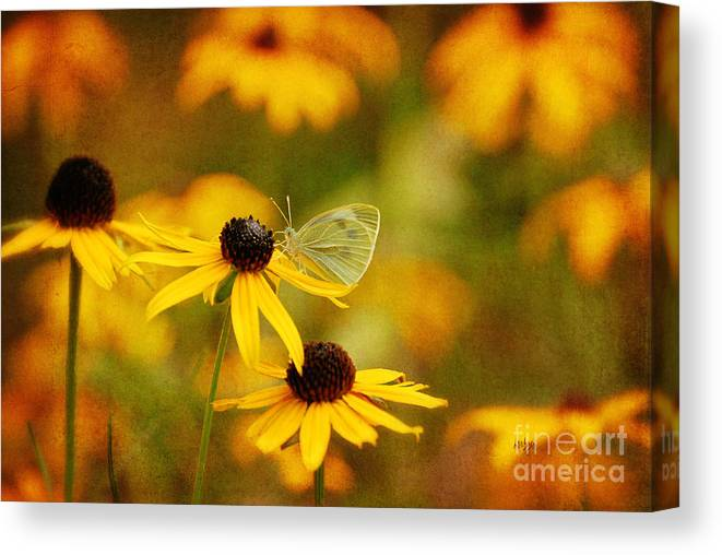 Butterfly Canvas Print featuring the photograph Abundance by Lois Bryan