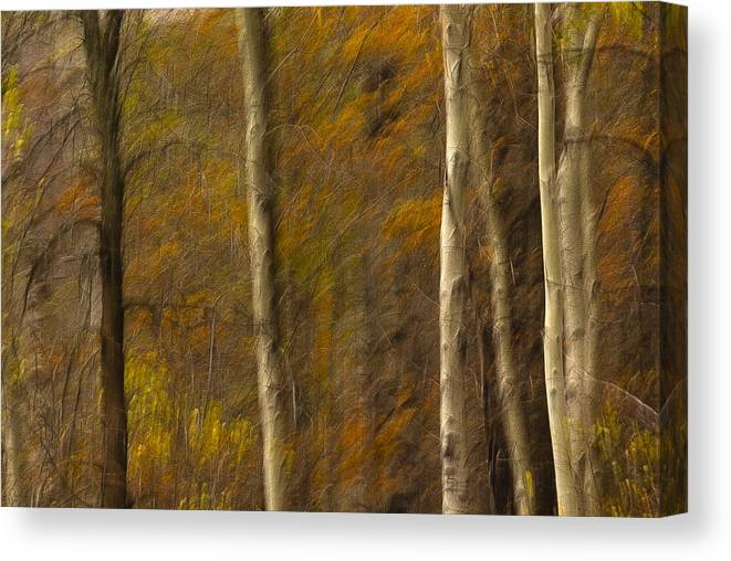 Autumn Canvas Print featuring the photograph Autumn Trees by Judi Smelko