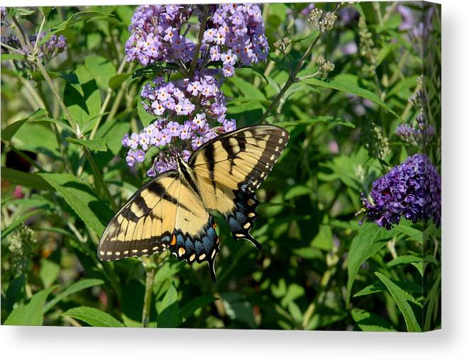 Swallowtail Butterfly Canvas Print featuring the photograph Butterfly 135 by Joyce StJames