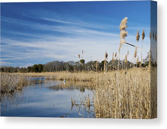 Cape May Canvas Print featuring the photograph Cape May Marshes by Jennifer Ancker