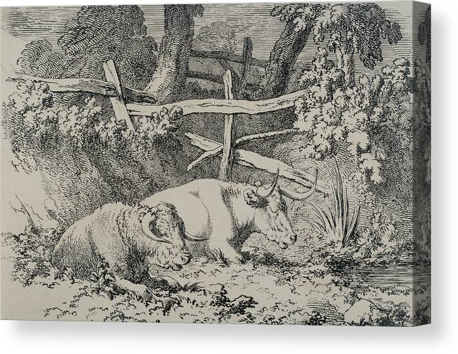 Cow Canvas Print featuring the drawing Cattle Resting by Robert Hills