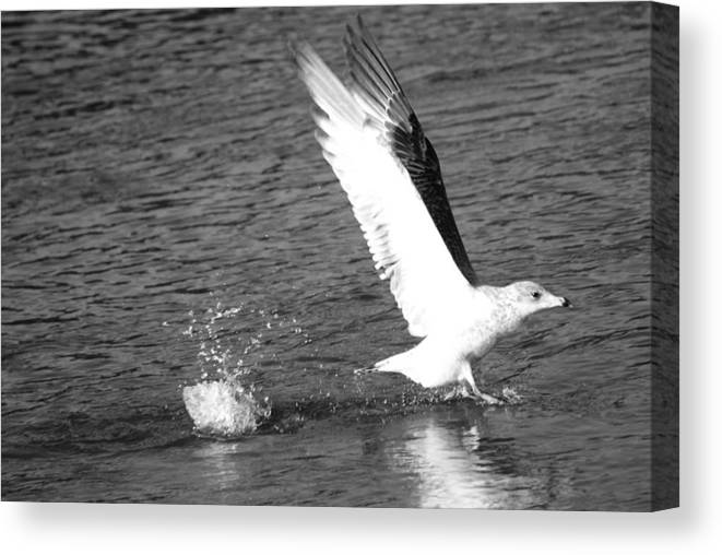 Birds Canvas Print featuring the photograph Cleared For Takeoff by Joe Bledsoe