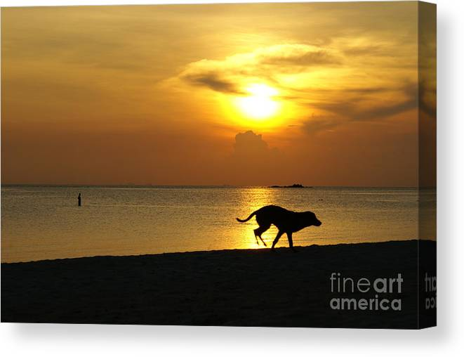 Dog Canvas Print featuring the photograph Dog Day Afternoon by Gregory Smith