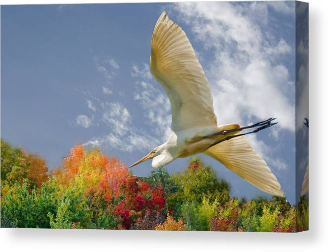 Egrets Canvas Print featuring the pyrography Egret by Ragai Karas