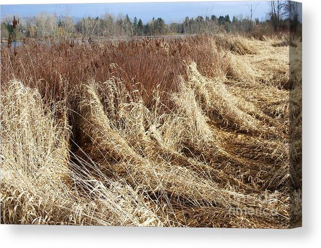 Fall Grass Canvas Print featuring the photograph Fall 2 by Bill Thomson