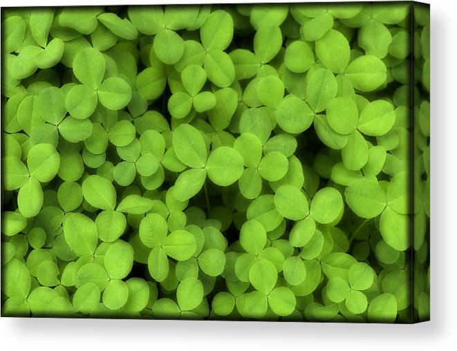 Clover Canvas Print featuring the photograph Field Of Clover E52 by Wendell Franks
