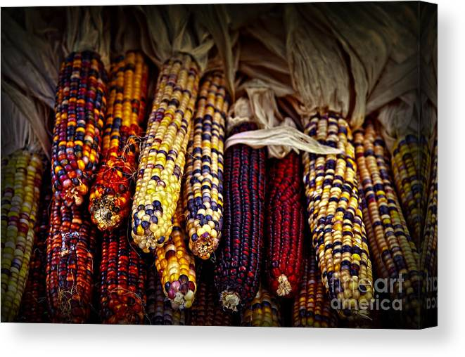 Corn Canvas Print featuring the photograph Indian Corn by Elena Elisseeva