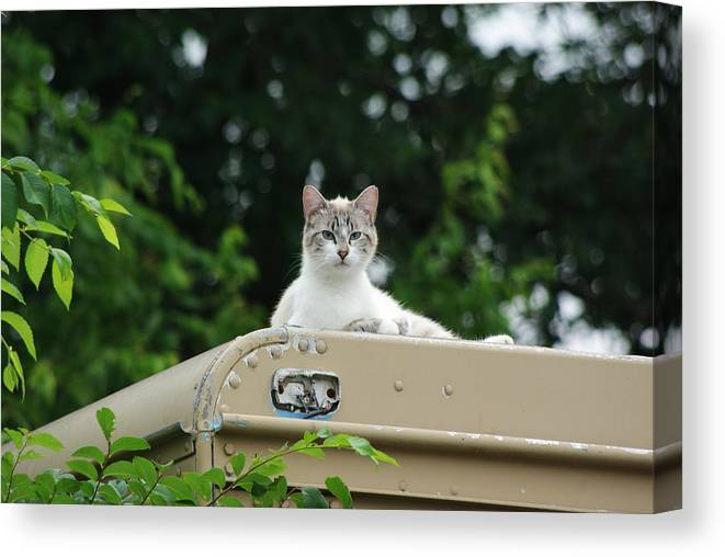 Pet Canvas Print featuring the photograph Joey by Robyn Stacey